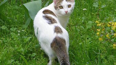 Katzen können im Garten großen Schaden anrichten.  - Foto: zucker66 / iStock