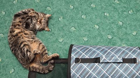 Das erwartet Sie, wenn Sie sich eine Katze anschaffen - Foto: g215 / iStock