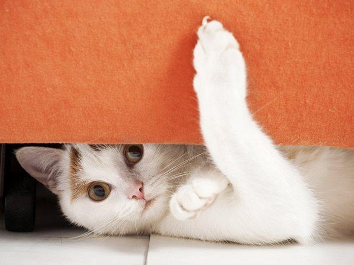 So klappt das Eingewöhnen Ihrer Katze.