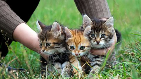 Was zu tun ist, wenn man Katzenbabys findet - Foto: yanikap / iStock