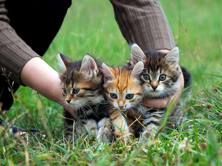 Was zu tun ist, wenn man Katzenbabys findet