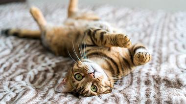 Katzenhaare entfernen: So gehts - Foto: Ingus Kruklitis / iStock