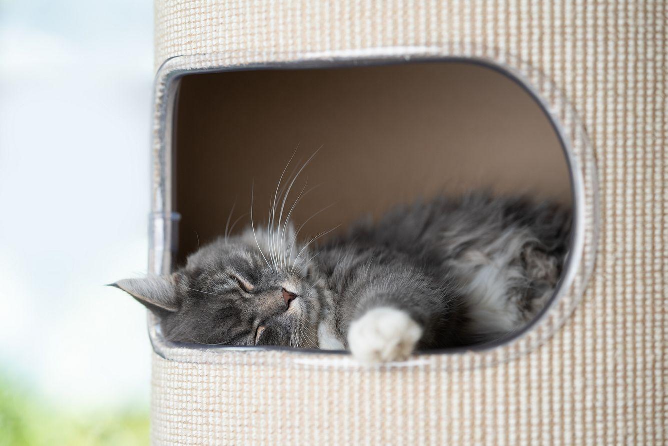 Katzenhöhle mit einer Katze