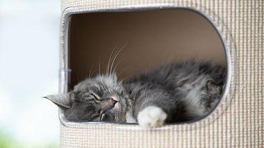 Katzenhöhle mit einer Katze - Foto: iStock/Nils Jacobi