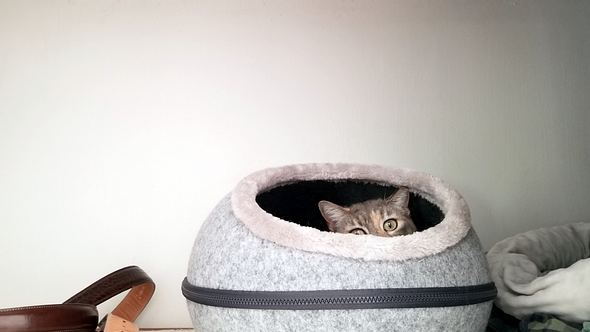Katze versteckt sich in Katzenhöhle aus Filz - Foto: iStock/Heather Broccard-Bell