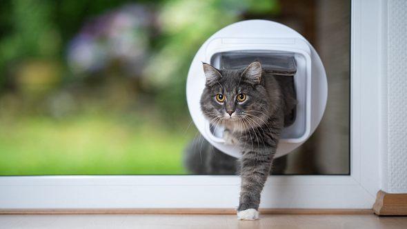 Katzenklappe mit Mikrochip - Foto: iStock/Nils Jacobi