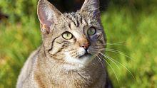 Von ausgefallen bis traditionell: In unserer Auflistung für männliche Katzennamen ist für jeden etwas dabei. - Foto: ThomasSaupe / iStock