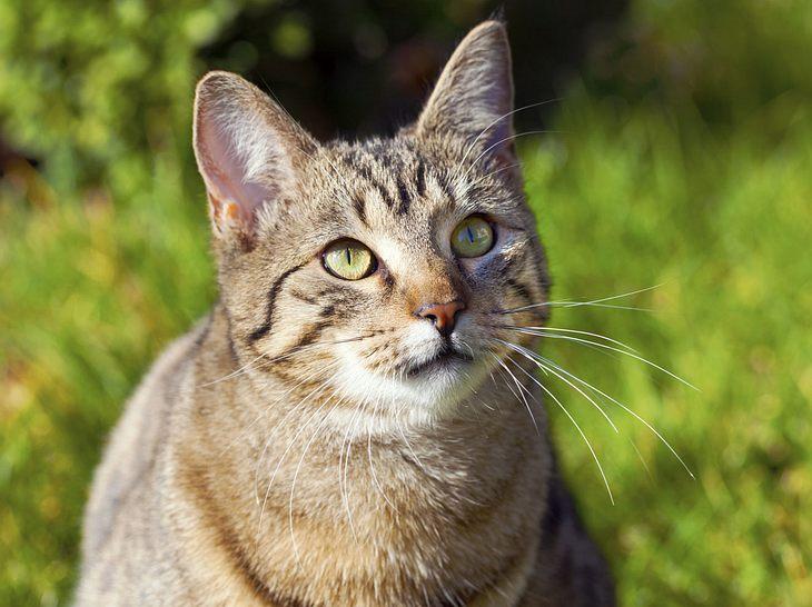 Von ausgefallen bis traditionell: In unserer Auflistung für männliche Katzennamen ist für jeden etwas dabei.