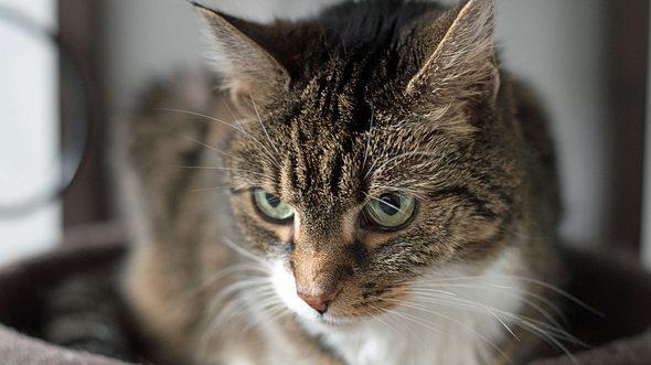 Schöne Ideen für weibliche Katzennamen. - Foto: Christian Horz / iStock