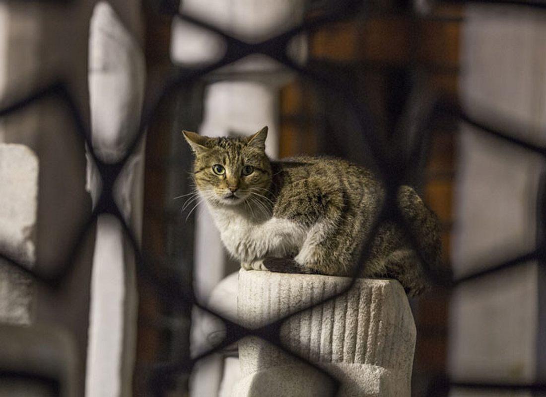 Neue Aufgabe für Katzenopa macht ihn zum glücklichsten Kater der Welt