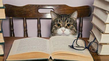 Was jede Katze wissen sollte