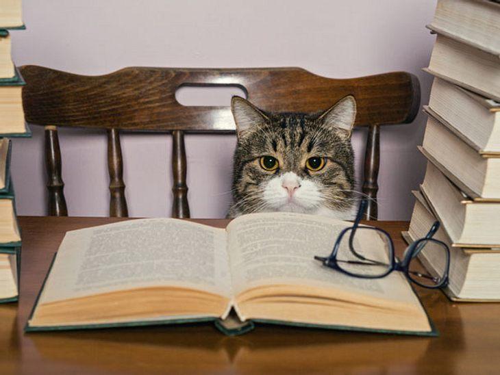 Katzenregeln: Was jede Katze wissen muss