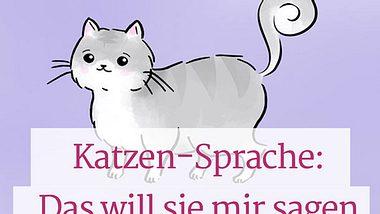 Was sagt die Katze mit ihrem Schwanz?