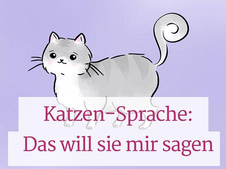 Katzensprache: Was mir meine Katze sagen will