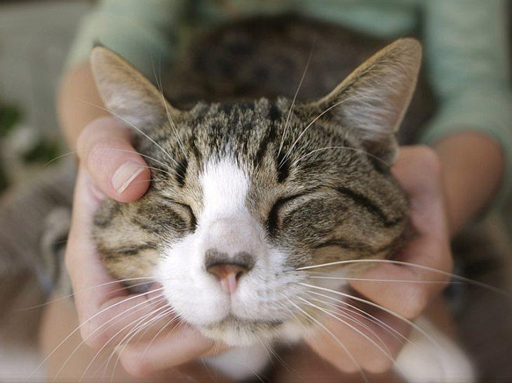 Katzen lieben Menschen doch mehr als Essen