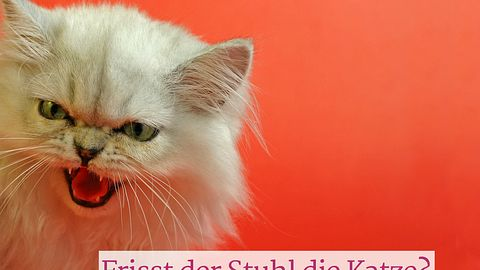 Achtung! Stuhl isst Katze