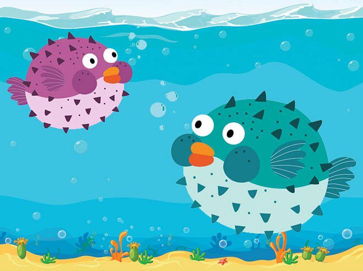 Kugelfische sind kreative Meister bei der Partnersuche
