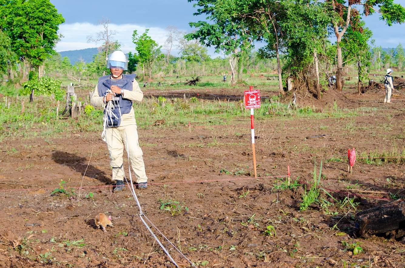 Ein Landminensucher mit einer speziell ausgebildeten Ratte an der Leine.