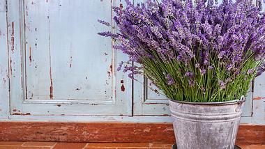 Lavendelöl und Co.