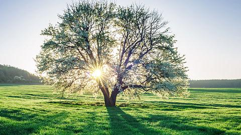 Kennen Sie Ihren Lebensbaum?