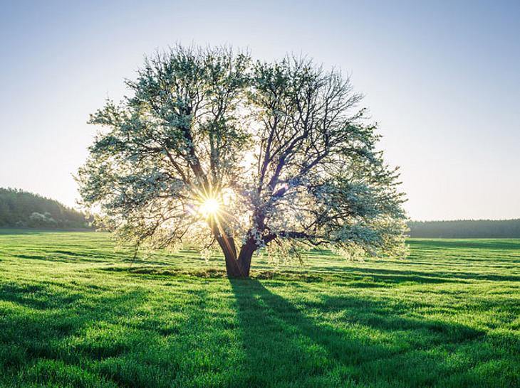 Charakterfrage: Kennen Sie Ihren Lebensbaum?