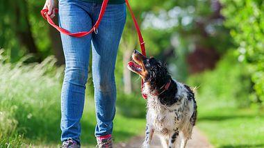 Leinenpflicht für Hunde - Foto: chris-mueller / iStock