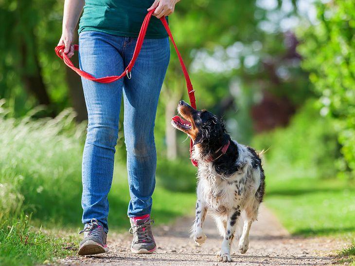 Leinenpflicht für Hunde