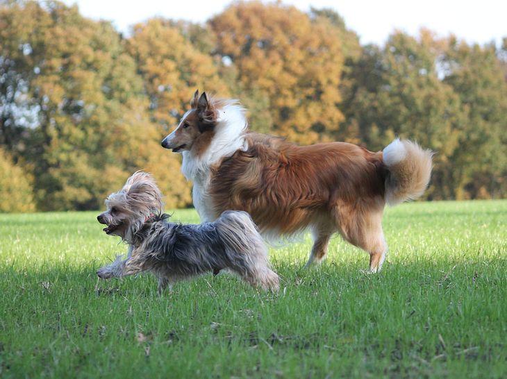 Lennox und Louis