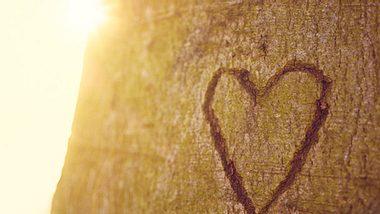 Geben Sie die Liebe niemals auf