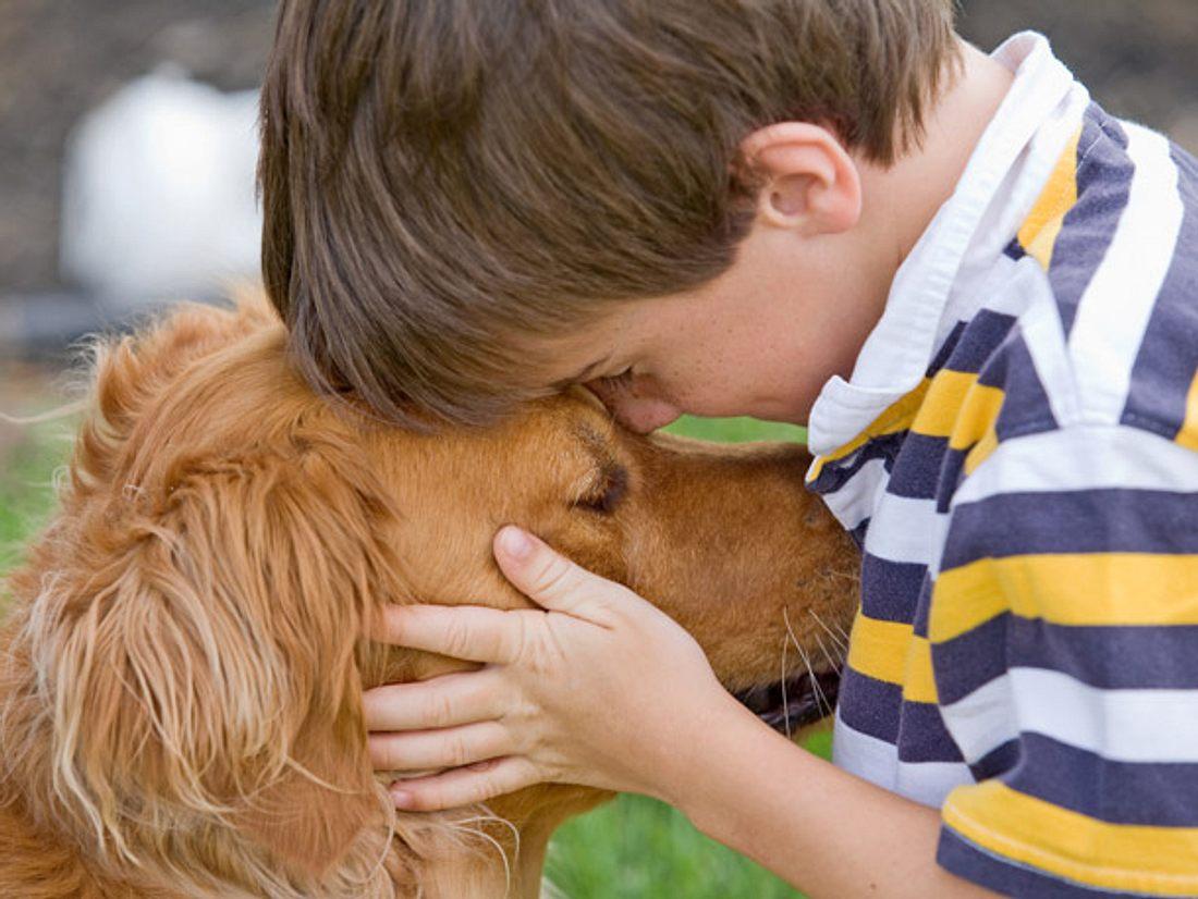 Wissenschaftler bewiesen in einer neuen Studie, das Hunde unsere Sprache besser verstehen als bisher gedacht.
