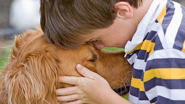 Wissenschaftler bewiesen in einer neuen Studie, das Hunde unsere Sprache besser verstehen als bisher gedacht. - Foto: sonyae / iStock