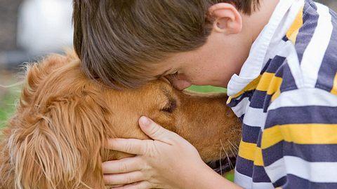 Hunde verstehen, was wir ihnen sagen