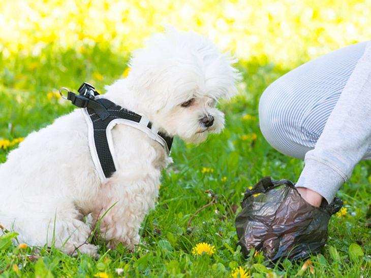 Es ist keine angenehme Aufgabe, doch Ihrem Vierbeiner zuliebe sollten Sie Hundekot regelmäßig untersuchen und auf Veränderungen achten.