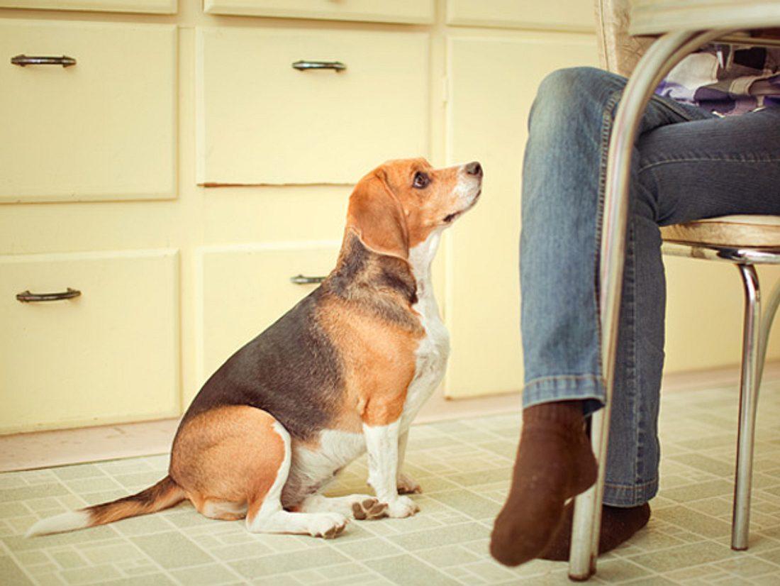Damit Ihr Vierbeiner gesund bleibt, sollten Sie wissen, was Hunde nicht essen dürfen.