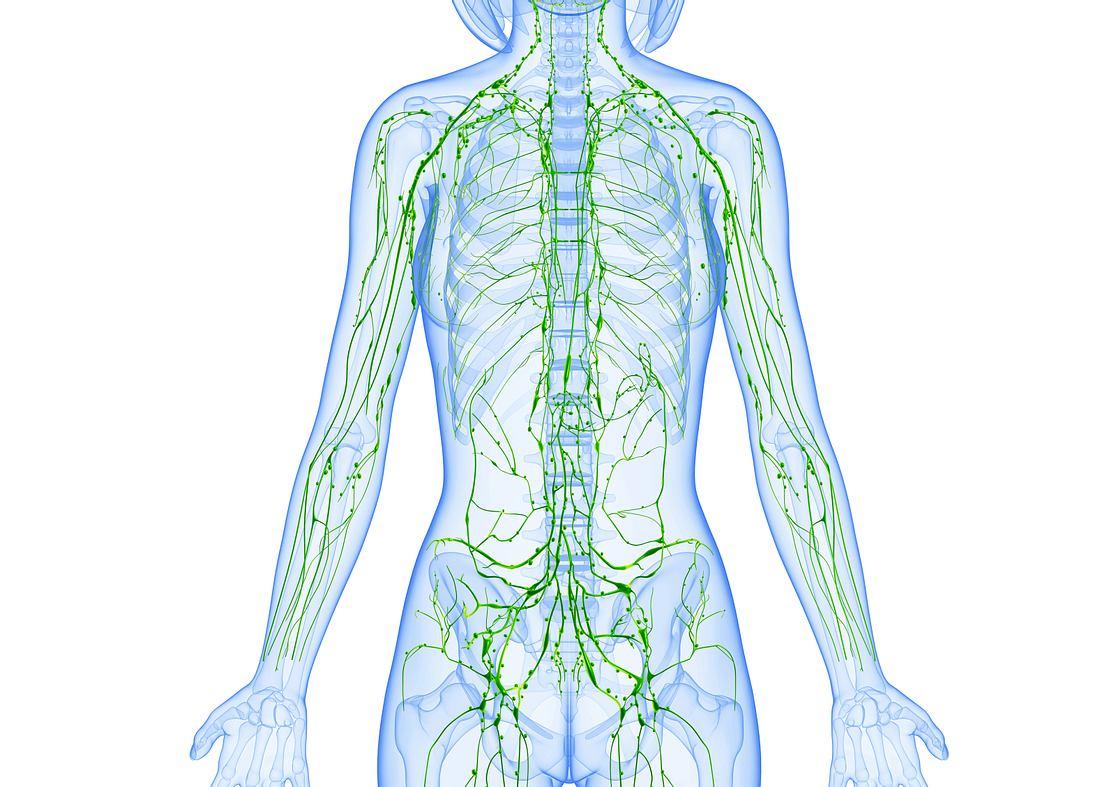 Lymphsystem: Alle Fakten zum geheimen Netzwerk