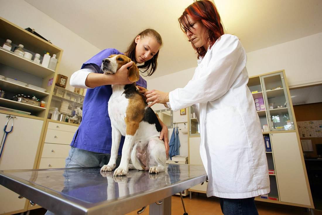 Ein Hund beim Tierarzt