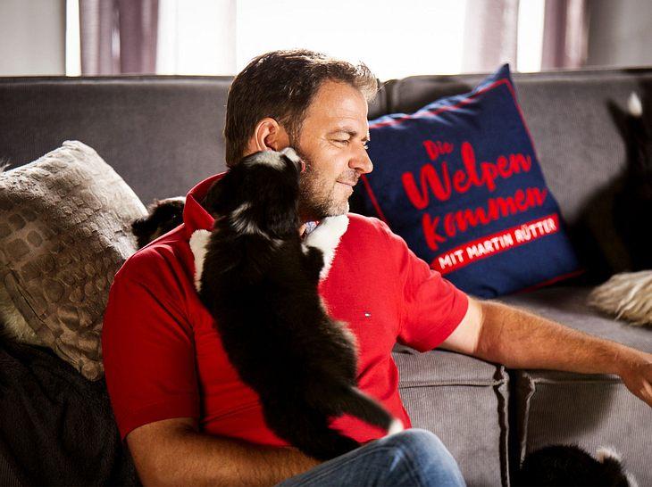 Martin Rütter erfreut sich als Hundeprofi großer Beliebtheit.