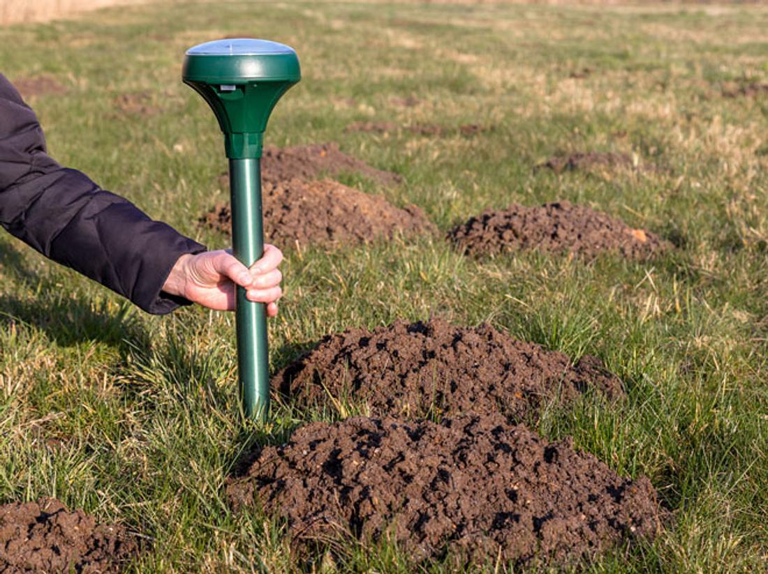 Mit diesen Mitteln vertreiben Sie Maulwürfe sanft aus Ihrem Garten