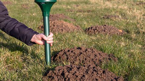 Mit diesen Mitteln vertreiben Sie Maulwürfe sanft aus Ihrem Garten - Foto: Nemo1963 / iStock