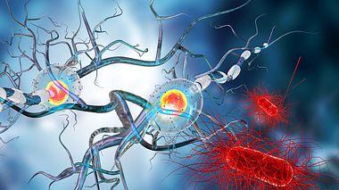 Multiple Sklerose: Welche Symptome gibt es? - Foto: Ralwel / iStock