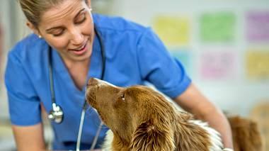 Naturheilkunde bei Haustieren - Foto: iStock // FatCamera