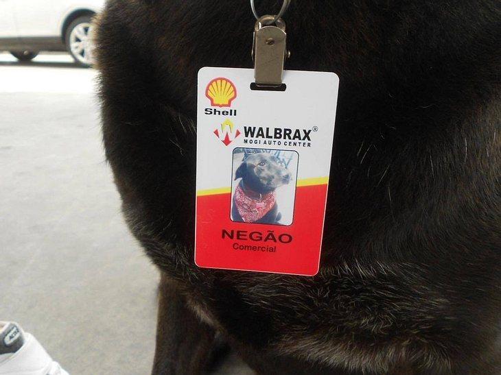Negao kann sich als vollwertiger Mitarbeiter ausweisen.