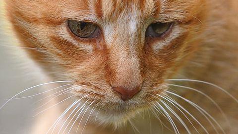 Tolle Neuigkeiten für die traurigste Katze der Welt - Foto: khr128 / iStock
