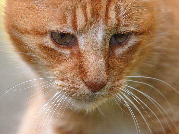 Tolle Neuigkeiten für die traurigste Katze der Welt