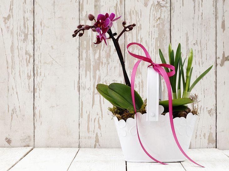 """Orchideen zu verschenken bedeutet: """"Du bist wunderschön!"""""""
