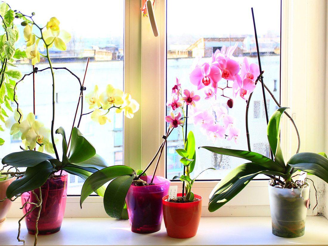 Orchideenerde? So machen Sie Orchideensubstrat selbst