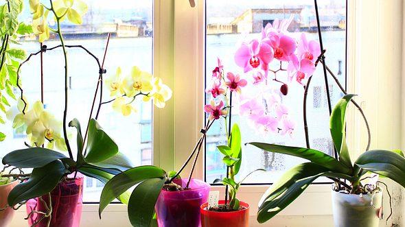 Orchideenerde: So machen Sie Orchideensubstrat selbst