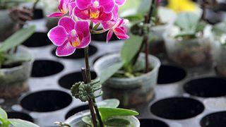 Tipps für den Orchideen-Kauf