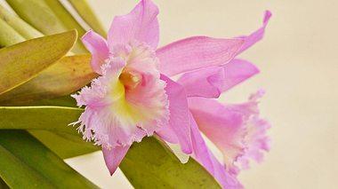 Orchideen vor Krankheiten schützen