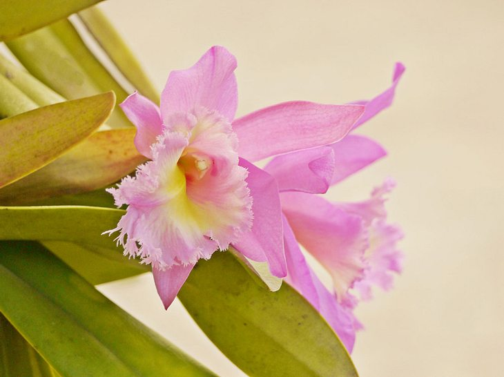 So können Orchideen vor Krankheiten und Pilzbefall geschützt werden.